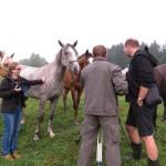 """Koně naopak můžeme točit i z blízka; dobře nám """"vyčistili"""" objektiv kamery"""